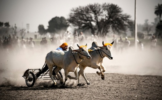 offbet travel india, top offbeat destinations in India, rural olympics in India