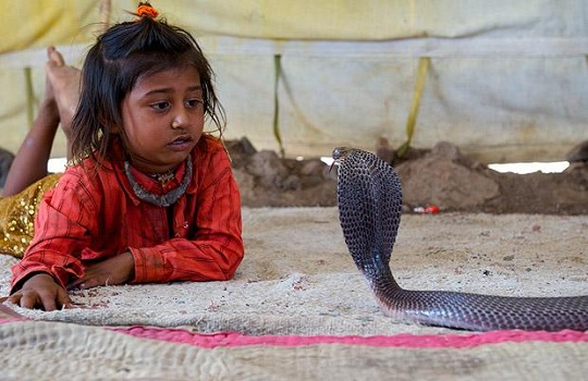 offbeat travel India, top 10 offbeat places in India, snake charming vadi tribe in Gujarat