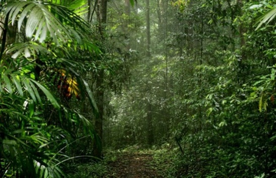 best time to visit Agumbe, monsoon india holidays in karnataka, Indian eagle travel blog, cheap flight tickets to India
