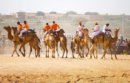 offbeat festivals of India, rural festivals of rajasthan, about gogamedi fair jaipur, cheap flights to Jaipur, cheap airfares to India